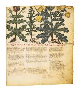 The Dioscorides of Naples, De Materia Medica, Facsimile Edition