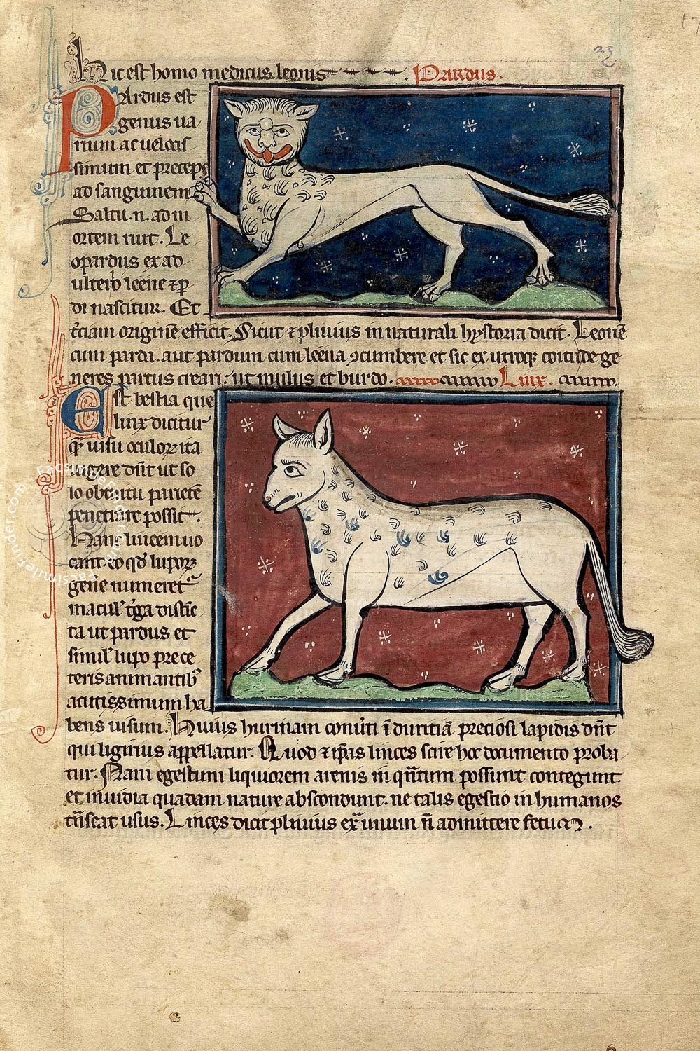 Westminster Bestiary, MS 22: Animals are depicted on red or blue backgrounds