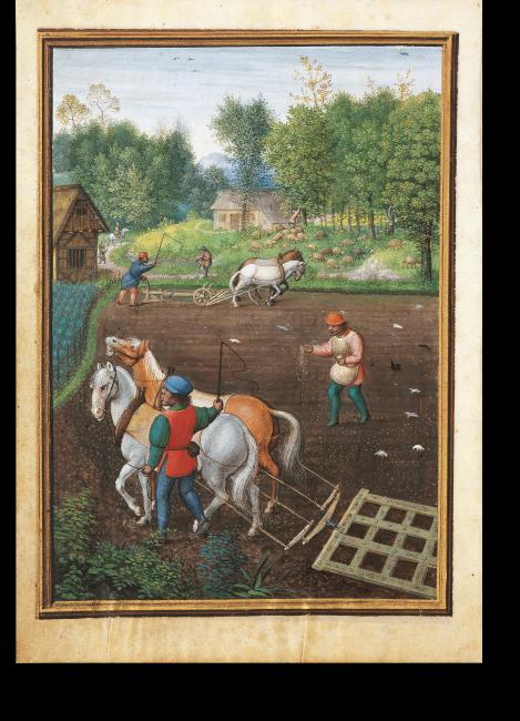 Fol. 10v: Monatsbild September. Nach der Ernte erfolgt das Pflügen und Säen. Das Pferdegespann im Vordergrund zieht eine Egge, ein weiteres im Hintergrund führt einen Pflug.