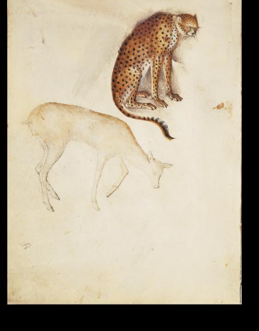 fol. 21v: Ein Gepard, direkt darunter eine Gazelle