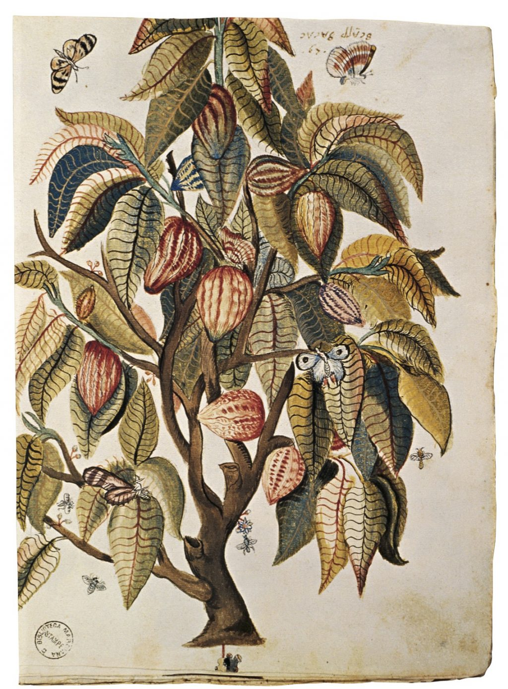 Erbolario's plant illustration