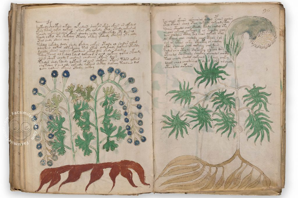 Voynich manuscript facsimile: Additional unidentified plant species