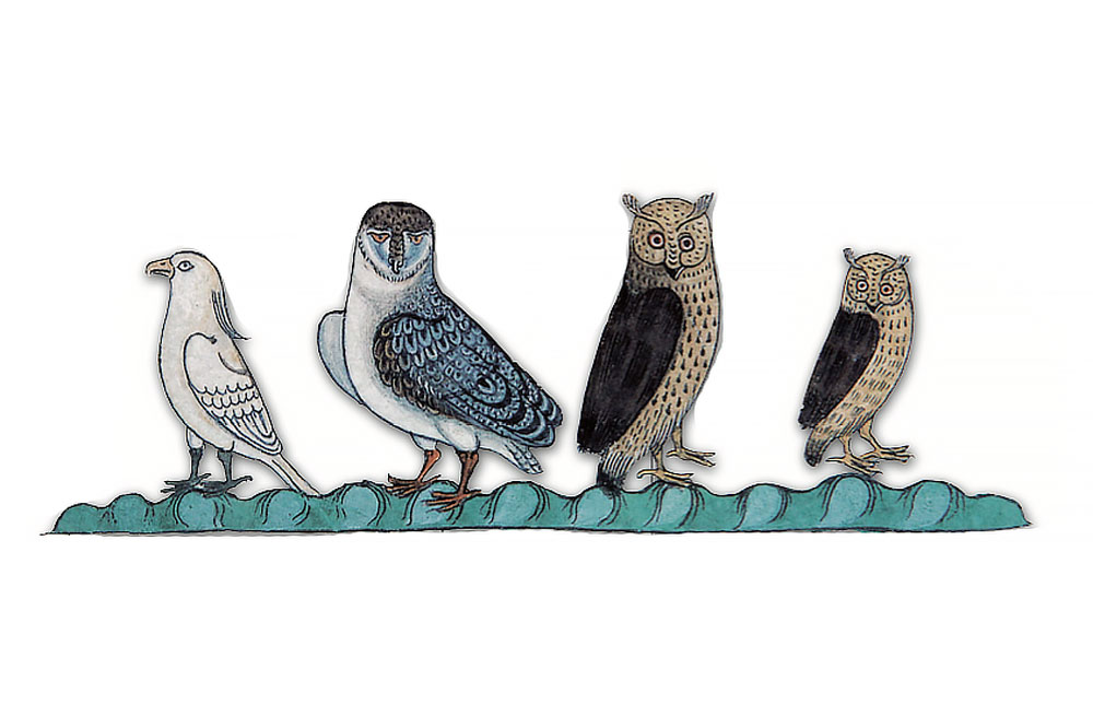 F. 31v. Two owls, one male and one female, a tawny owl, and a white bird of prey.