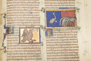Illuminations of the Peterborough Bestiary