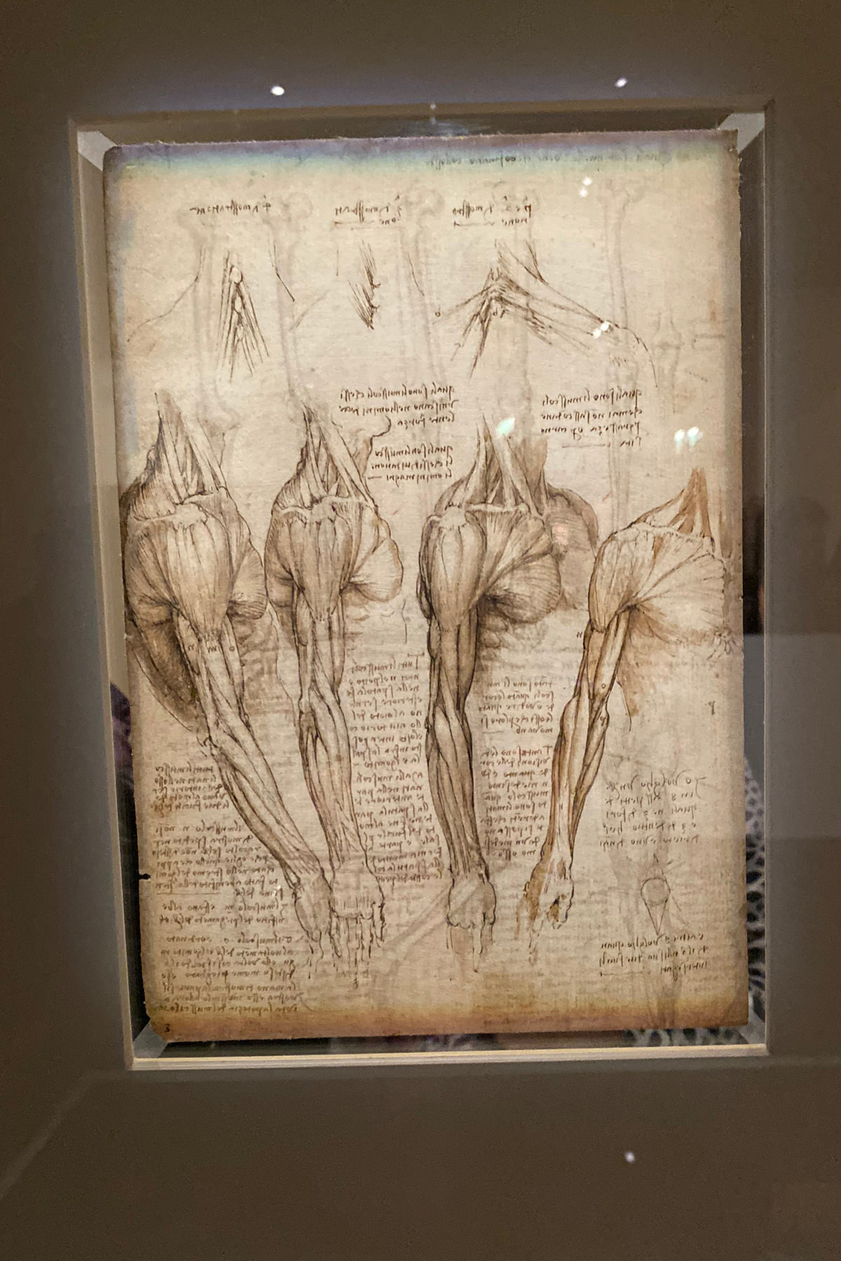 Leonardo da Vinci Exhibition in the Louvre Museum: Sketch for Muscles and Skeletons