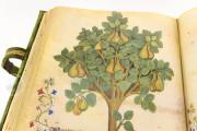 Historia Plantarum, Ms. 459 - Biblioteca Casanatense (Rome, Italy) − photo 6