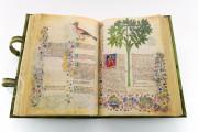 Historia Plantarum, Ms. 459 - Biblioteca Casanatense (Rome, Italy) − photo 7