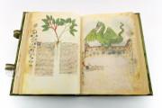 Historia Plantarum, Ms. 459 - Biblioteca Casanatense (Rome, Italy) − photo 8