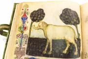 Historia Plantarum, Ms. 459 - Biblioteca Casanatense (Rome, Italy) − photo 11