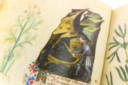 Historia Plantarum, Ms. 459 - Biblioteca Casanatense (Rome, Italy) − photo 13