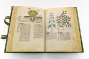 Historia Plantarum, Ms. 459 - Biblioteca Casanatense (Rome, Italy) − photo 17