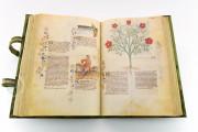 Historia Plantarum, Ms. 459 - Biblioteca Casanatense (Rome, Italy) − photo 19