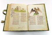 Historia Plantarum, Ms. 459 - Biblioteca Casanatense (Rome, Italy) − photo 21