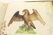 Historia Plantarum, Ms. 459 - Biblioteca Casanatense (Rome, Italy) − photo 22