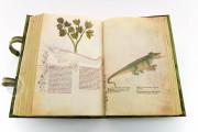 Historia Plantarum, Ms. 459 - Biblioteca Casanatense (Rome, Italy) − photo 23