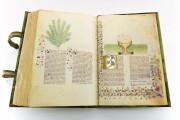 Historia Plantarum, Ms. 459 - Biblioteca Casanatense (Rome, Italy) − photo 26