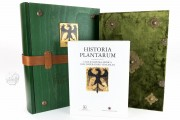 Historia Plantarum, Ms. 459 - Biblioteca Casanatense (Rome, Italy) − photo 28