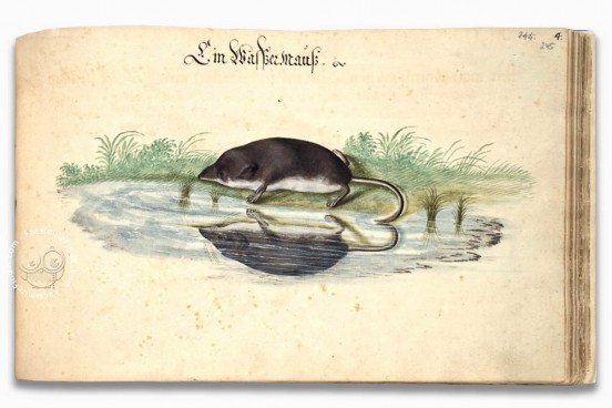 Book on Fishes, Birds, and Mammals by Leonhard Baldner, Kassel, Universitätsbibliothek Kassel, 2° Ms. phys. et hist. nat. − Photo 1
