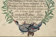 Book on Fishes, Birds, and Mammals by Leonhard Baldner, Kassel, Universitätsbibliothek Kassel, 2° Ms. phys. et hist. nat. − Photo 2