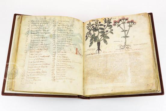 Dioscorides Neapolitanus, Naples, Biblioteca Nazionale Vittorio Emanuele III, Ms. ex Vindob. gr. 1 − Photo 1