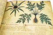 Dioscorides Neapolitanus, Naples, Biblioteca Nazionale Vittorio Emanuele III, Ms. ex Vindob. gr. 1 − Photo 6