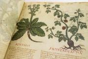 Dioscorides Neapolitanus, Naples, Biblioteca Nazionale Vittorio Emanuele III, Ms. ex Vindob. gr. 1 − Photo 8