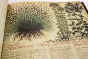 Dioscorides Neapolitanus, Naples, Biblioteca Nazionale Vittorio Emanuele III, Ms. ex Vindob. gr. 1 − Photo 17