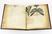 Dioscorides Neapolitanus, Naples, Biblioteca Nazionale Vittorio Emanuele III, Ms. ex Vindob. gr. 1 − Photo 19