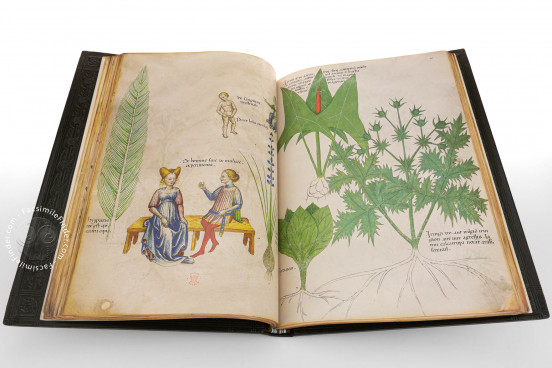 Tractatus de Herbis, London, British Library, Sloane Ms. 4016 − Photo 1