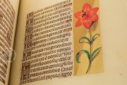 La Flora - Book of Hours, Naples, Biblioteca Nazionale Vittorio Emanuele III, Ms. I.B.51 − Photo 11