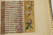 La Flora - Book of Hours, Naples, Biblioteca Nazionale Vittorio Emanuele III, Ms. I.B.51 − Photo 20