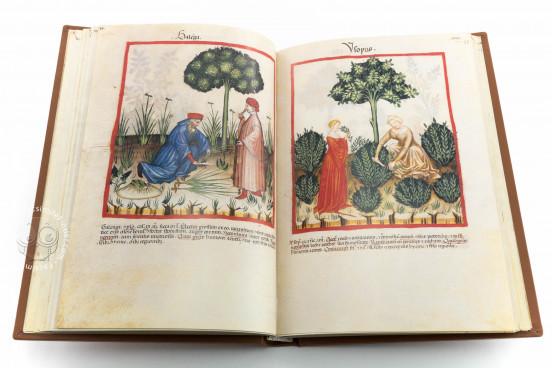 Tacuinum Sanitatis in Medicina, Codex Vindobonensis S. N. 2644 - Österreichische Nationalbibliothek (Vienna, Austria) Österreichische Nationalbibliothek (Vienna, Austria) − photo 1