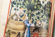 Tacuinum Sanitatis in Medicina, Codex Vindobonensis S. N. 2644 - Österreichische Nationalbibliothek (Vienna, Austria) Österreichische Nationalbibliothek (Vienna, Austria) − photo 5