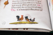 Book of Hours of the Bishop Morgades, Vic, Museu Episcopal de Vic, Ms 88 − Photo 8