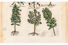 Historia Naturalis: De Arboribus et Fructicibus Facsimile Edition