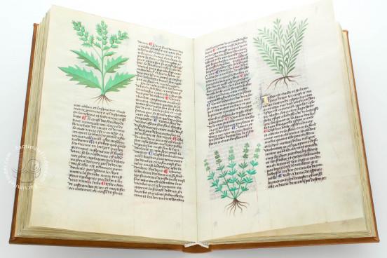 Herbolaire, Est.28=α.M.5.9 - Biblioteca Estense Universitaria (Modena, Italy) − photo 1