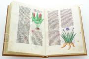 Herbolaire, Est.28=α.M.5.9 - Biblioteca Estense Universitaria (Modena, Italy) − photo 6