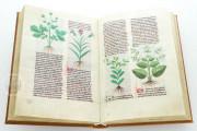 Herbolaire, Est.28=α.M.5.9 - Biblioteca Estense Universitaria (Modena, Italy) − photo 10