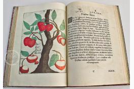 Flora Sinensis Facsimile Edition