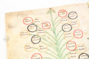 Ramon Llull Tree of the Philosophy of Love Biblioteca Diocesana de Palma de Mallorca