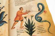 Codex of Medicine of Frederick II, Florence, Biblioteca Medicea Laurenziana, Ms. Plut. 73.16 − Photo 3