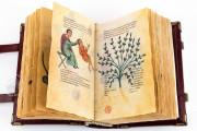 Codex of Medicine of Frederick II, Florence, Biblioteca Medicea Laurenziana, Ms. Plut. 73.16 − Photo 5
