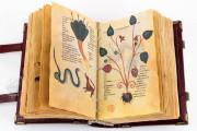 Codex of Medicine of Frederick II, Florence, Biblioteca Medicea Laurenziana, Ms. Plut. 73.16 − Photo 6