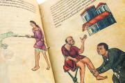 Codex of Medicine of Frederick II, Florence, Biblioteca Medicea Laurenziana, Ms. Plut. 73.16 − Photo 9