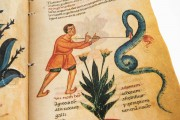 Codex of Medicine of Frederick II, Florence, Biblioteca Medicea Laurenziana, Ms. Plut. 73.16 − Photo 13