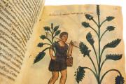 Codex of Medicine of Frederick II, Florence, Biblioteca Medicea Laurenziana, Ms. Plut. 73.16 − Photo 15