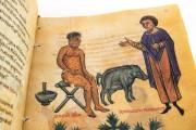 Codex of Medicine of Frederick II, Florence, Biblioteca Medicea Laurenziana, Ms. Plut. 73.16 − Photo 17