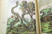 Discorsi del Mattioli Illustrated by Gherardo Cibo, Rari 278 - Biblioteca Alessandrina (Rome, Italy) Biblioteca Alessandrina (Rome, Italy) − photo 2
