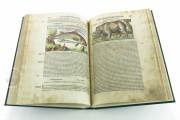 Discorsi del Mattioli Illustrated by Gherardo Cibo, Rari 278 - Biblioteca Alessandrina (Rome, Italy) Biblioteca Alessandrina (Rome, Italy) − photo 8