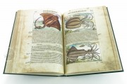 Discorsi del Mattioli Illustrated by Gherardo Cibo, Rari 278 - Biblioteca Alessandrina (Rome, Italy) Biblioteca Alessandrina (Rome, Italy) − photo 10